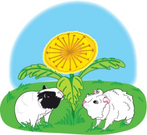 Bertie and Jenny guinea pig munching dandelions, an image from the guinea pig story, Bertie and the Big Squeak
