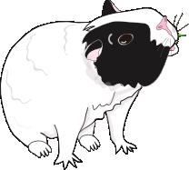 Bertie guinea pig