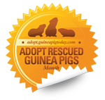 Adopt Rescued Guinea Pigs Month