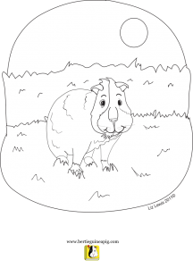 Bertie Guinea Pig colouring in sheet: Bertie