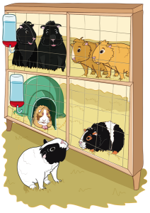 Bertie makes friends at the guinea pig rescue. An image from the story, Bertie Comes to the Rescue