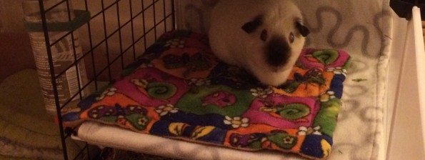 Peppa guinea pig on her bunk bed